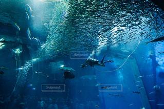 水族館の写真・画像素材[1217630]