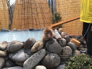 子猿のお風呂タイムの写真・画像素材[1219512]