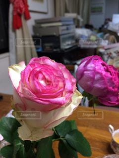 近くの花のアップの写真・画像素材[1214308]