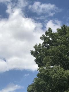 木と空と雲の写真・画像素材[1216030]