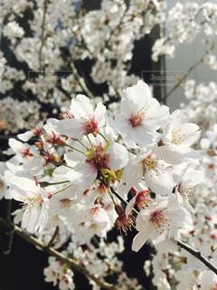 近くの花のアップの写真・画像素材[1214643]