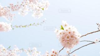 近くの花のアップの写真・画像素材[1214714]