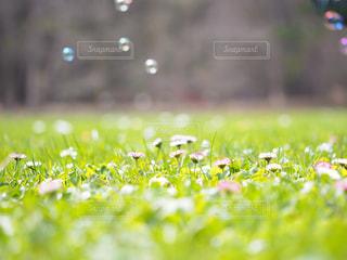 近くにいくつかの草のアップの写真・画像素材[1214750]