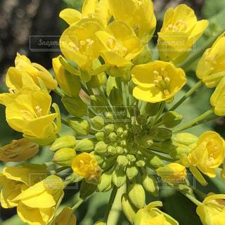 黄色の花の束の写真・画像素材[1215587]