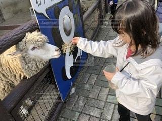 動物園でヤギのえさやりの写真・画像素材[1215798]