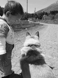 犬と触れ合うこどもの写真・画像素材[1232279]