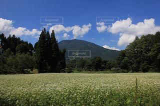山と花畑の写真・画像素材[1243166]