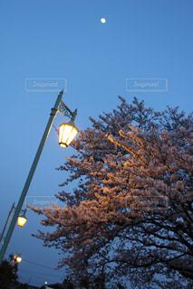 木からぶら下がってトラフィック ライトの写真・画像素材[1215090]