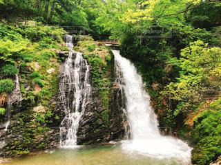 白金の滝の写真・画像素材[1215529]