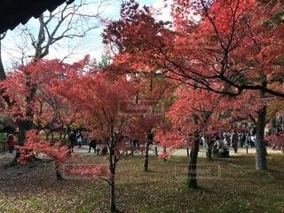 京都の紅葉 - No.1220035