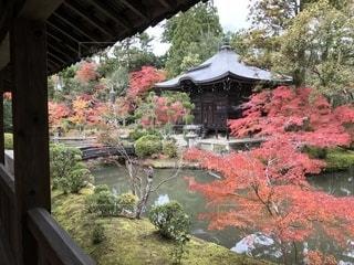 京都の紅葉 - No.1220039