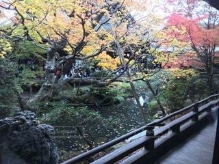 京都の紅葉の写真・画像素材[1220043]