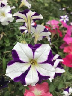 銀座の歩道の花の写真・画像素材[1225333]