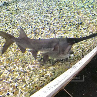 水の中の魚の群れの写真・画像素材[1256138]