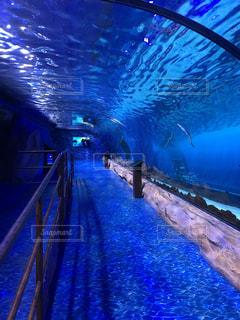 青と水の水泳の写真・画像素材[1257646]