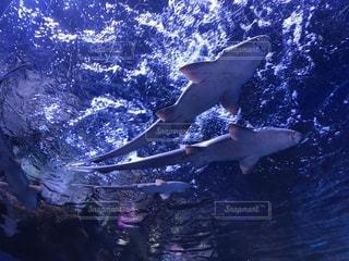 水の中の魚を握って男の写真・画像素材[1257870]