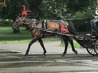 馬に乗る男馬車の写真・画像素材[1293167]