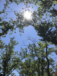 近くの木のアップの写真・画像素材[1294919]