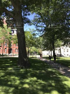 公園の大きな木の写真・画像素材[1294956]