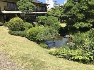 背景の水の庭の写真・画像素材[1317731]