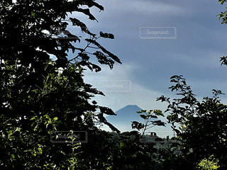 近くの木のアップの写真・画像素材[1321813]