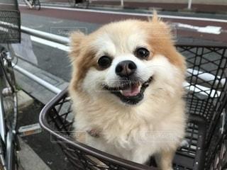 犬の写真・画像素材[1349784]