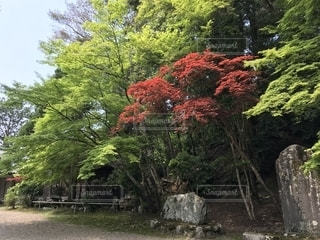 森の木の写真・画像素材[2261973]