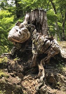 森の木の写真・画像素材[2263102]