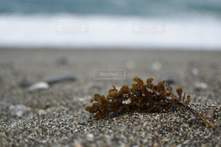 砂浜と海藻の写真・画像素材[1215940]