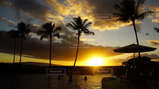 ヤシの木の横にある水の体に沈む夕日の写真・画像素材[1216236]