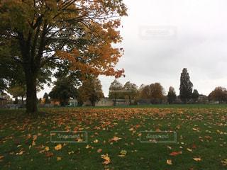 秋の公園の写真・画像素材[1217585]