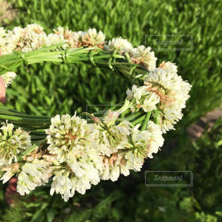 緑の植物の写真・画像素材[1218245]