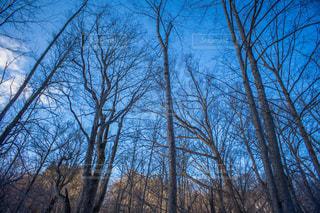 冬空の写真・画像素材[1227248]