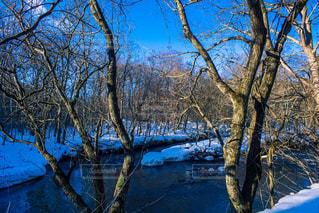 冬の渓流の写真・画像素材[1227249]