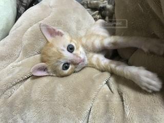 ベッドの上で横になっている猫 - No.1229458