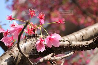 爽やかな日差しと花☺︎の写真・画像素材[1219088]