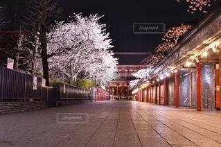 桜の写真・画像素材[44651]