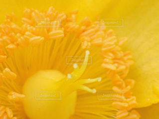 自然の写真・画像素材[226380]