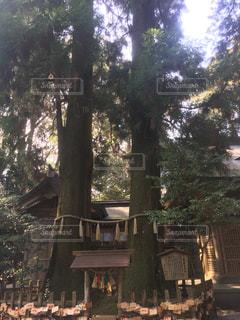 寄り添う大木の写真・画像素材[1220010]