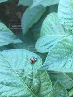 てんとう虫の冒険の写真・画像素材[1220795]