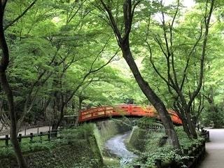 森の川に架かる橋の写真・画像素材[1221279]