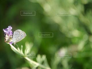 花と蝶の写真・画像素材[1221542]
