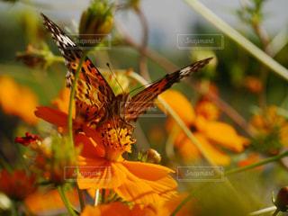 花と蝶のアップの写真・画像素材[1221879]