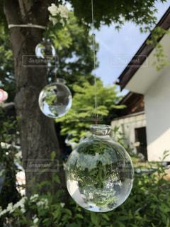 木に吊るされたガラスの花瓶の写真・画像素材[1222098]