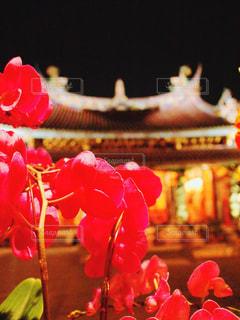 台北の寺院の写真・画像素材[1237744]