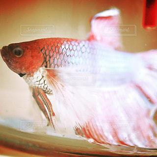 魚のぼやけた画像の写真・画像素材[1221706]