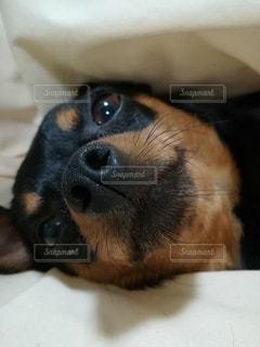 近くに犬のアップの写真・画像素材[1222270]