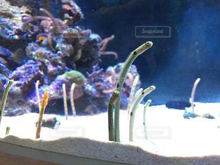 水面下を泳ぐ魚たちの写真・画像素材[1222998]