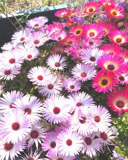 植物にピンクの花の写真・画像素材[1222783]