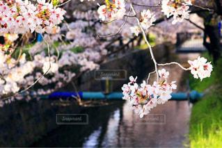 近くの花のアップの写真・画像素材[1222771]